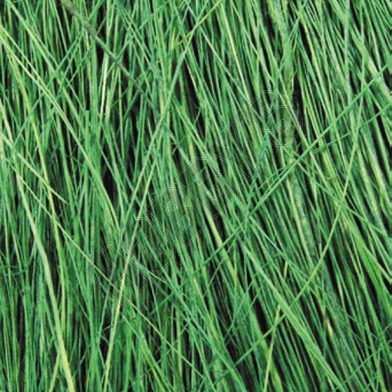 Field Grass - Light Green
