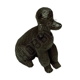 Dog - Black Poodle