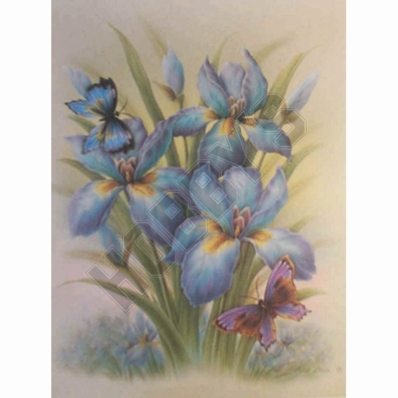 Iris With Butterflies - 3D Picture Kit