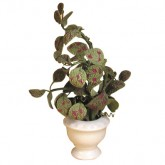 Plant in  Urn
