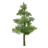 Pine 19mm