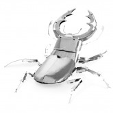 Stag Beetle Model