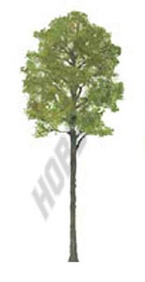 Cypress 50mm