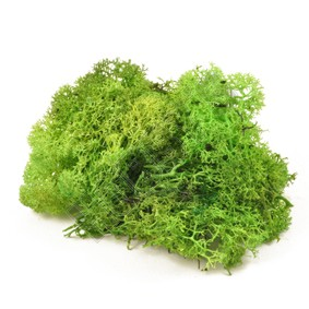 Light Green Lichen