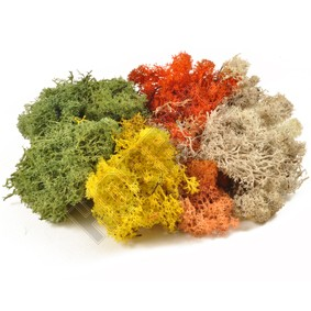 Lichen - Assorted Colours