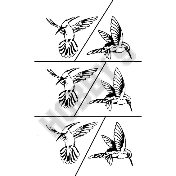 Birds Kingfisher X 6 (2 Different Flying Poses)