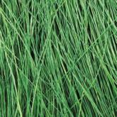 Field Grass - Light Green