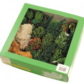 Box of 50 Trees