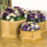 Planter Trio Design