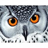 Owl's Look